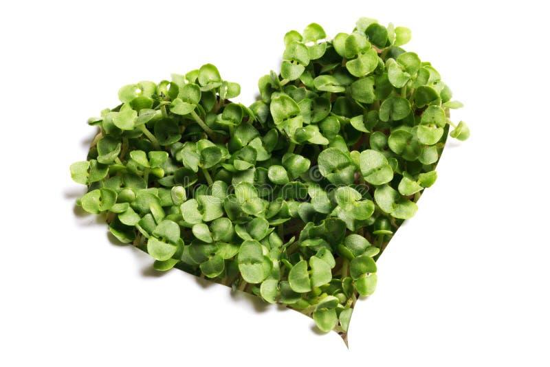 Coração de plantas verdes de broto imagens de stock