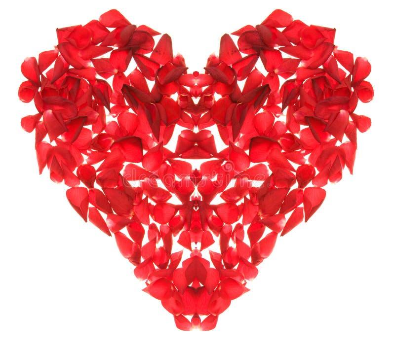 Coração de Rosa foto de stock