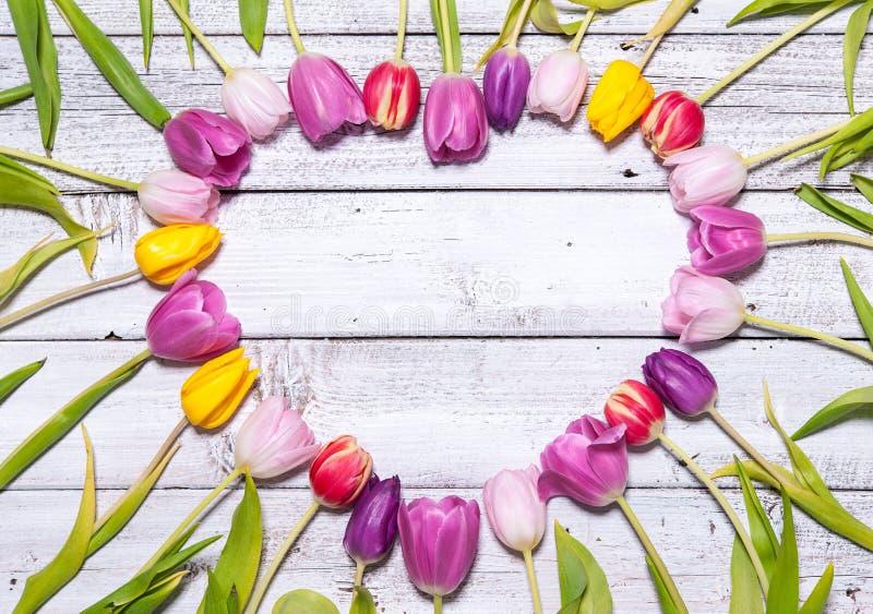 Coração de tulipas frescas imagens de stock royalty free