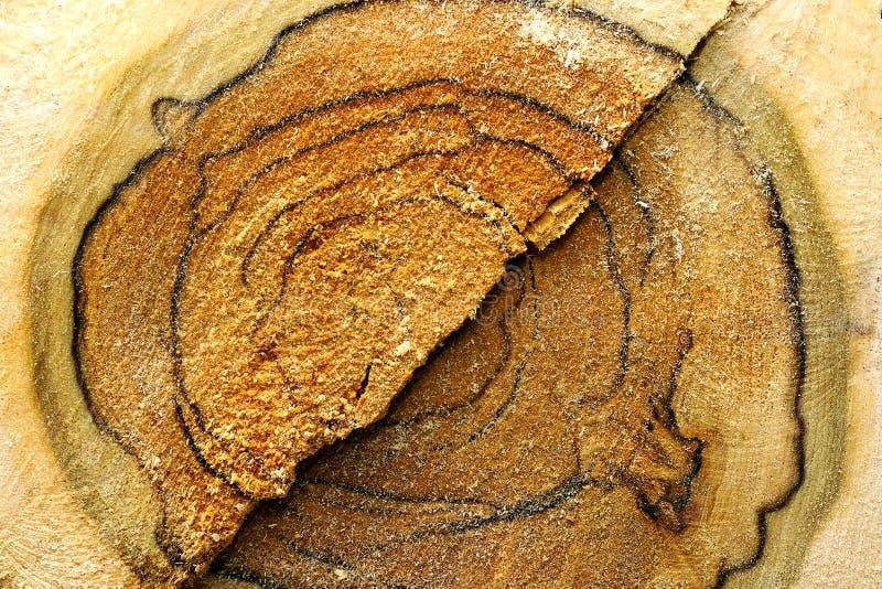 Coração de um log da árvore do corte fotografia de stock