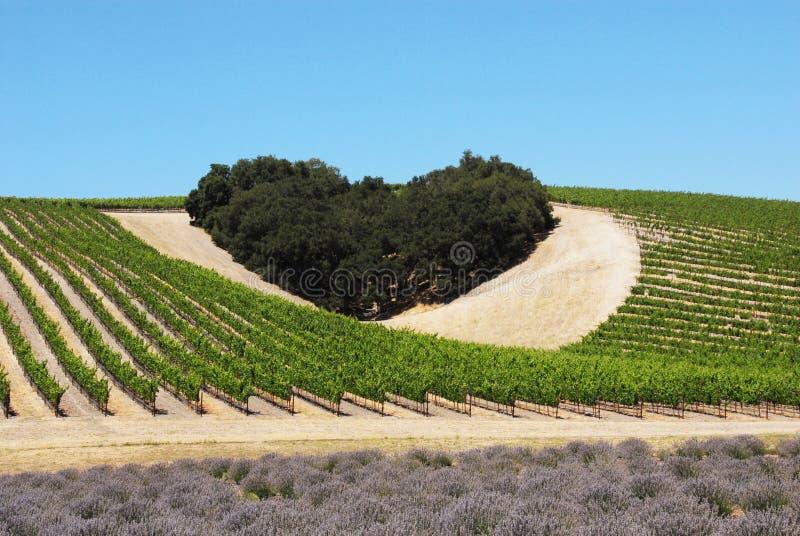 Coração do amor do vinho imagem de stock royalty free