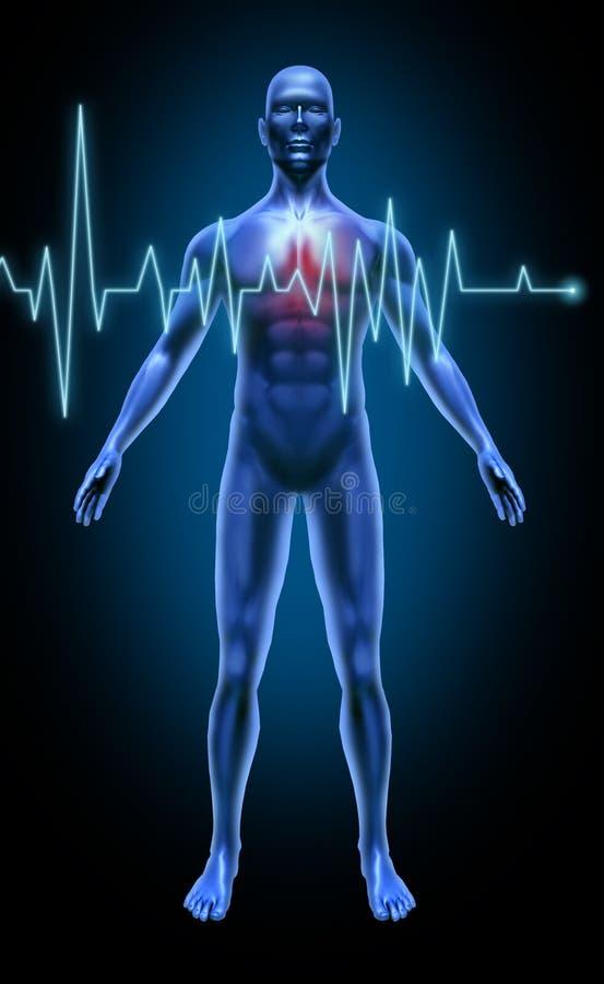 Coração do curso da taxa da monitoração da batida de coração do corpo humano ilustração royalty free