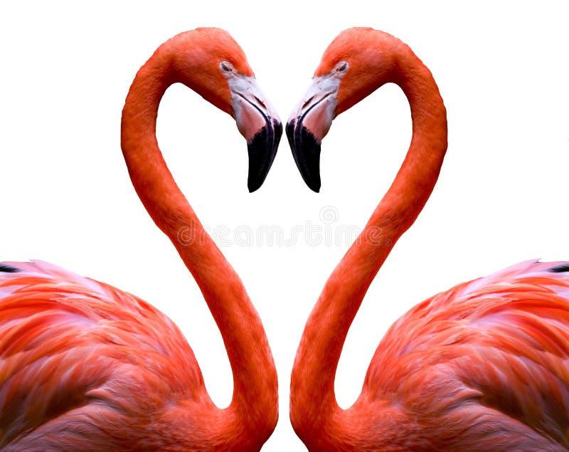 Coração do flamingo