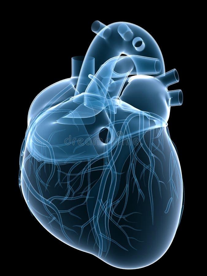 Coração do raio X ilustração royalty free