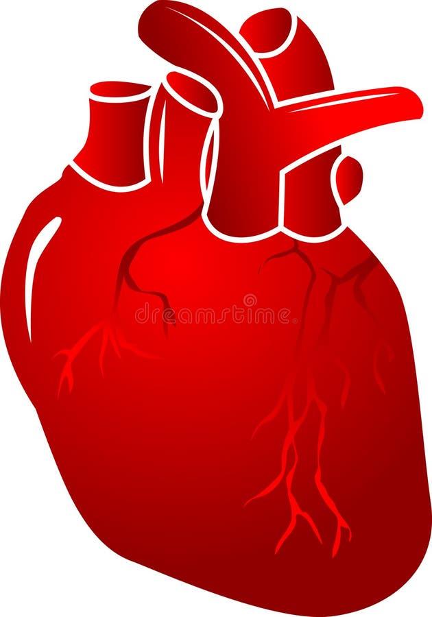 Coração do ser humano do vetor ilustração royalty free