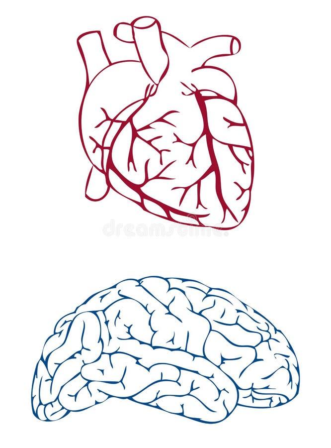 Coração e cérebro ilustração royalty free