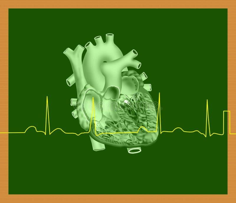 Coração e linha de ECG ilustração stock
