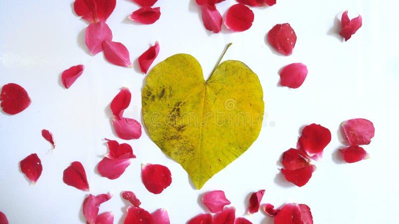 Coração e pétalas fotografia de stock