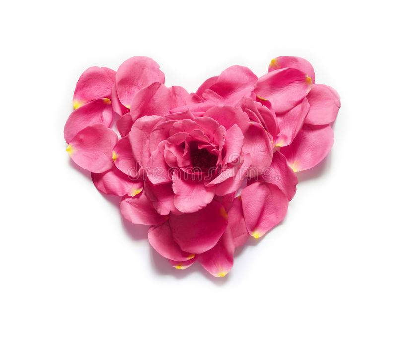Coração feito das pétalas cor-de-rosa Coração vermelho das pétalas cor-de-rosa sobre o fundo branco Vista superior com espaço da  fotografia de stock royalty free