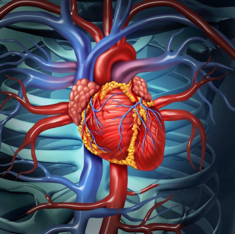 Coração humano cardiovascular ilustração royalty free