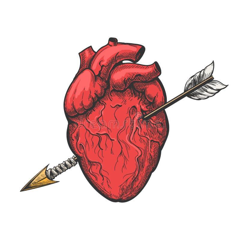 Coração humano com gravura a água-forte da tatuagem da seta ilustração do vetor