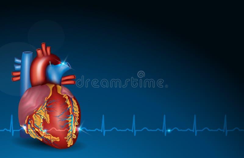 Coração humano e fundo azul ilustração stock