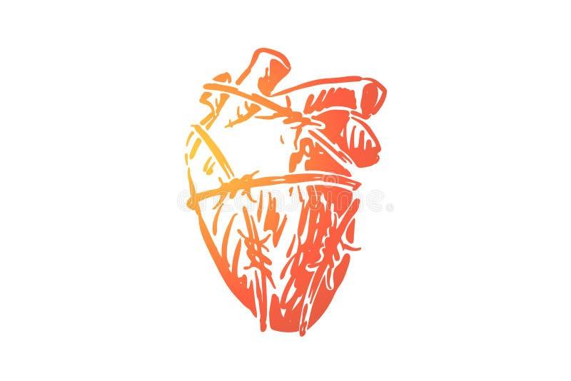 Coração humano no arame farpado, órgão de bombeamento do sangue envolvido pelo cabo com espinhos afiados ilustração do vetor