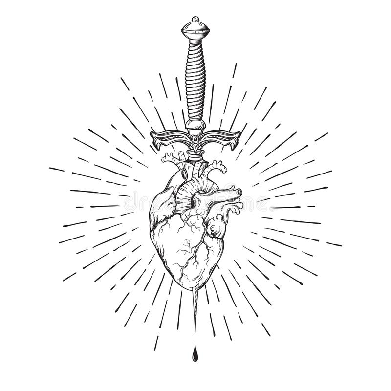 Coração humano perfurado com o punhal ritual nos raios de luz isolados na ilustração tirada do vetor do fundo mão branca ilustração stock