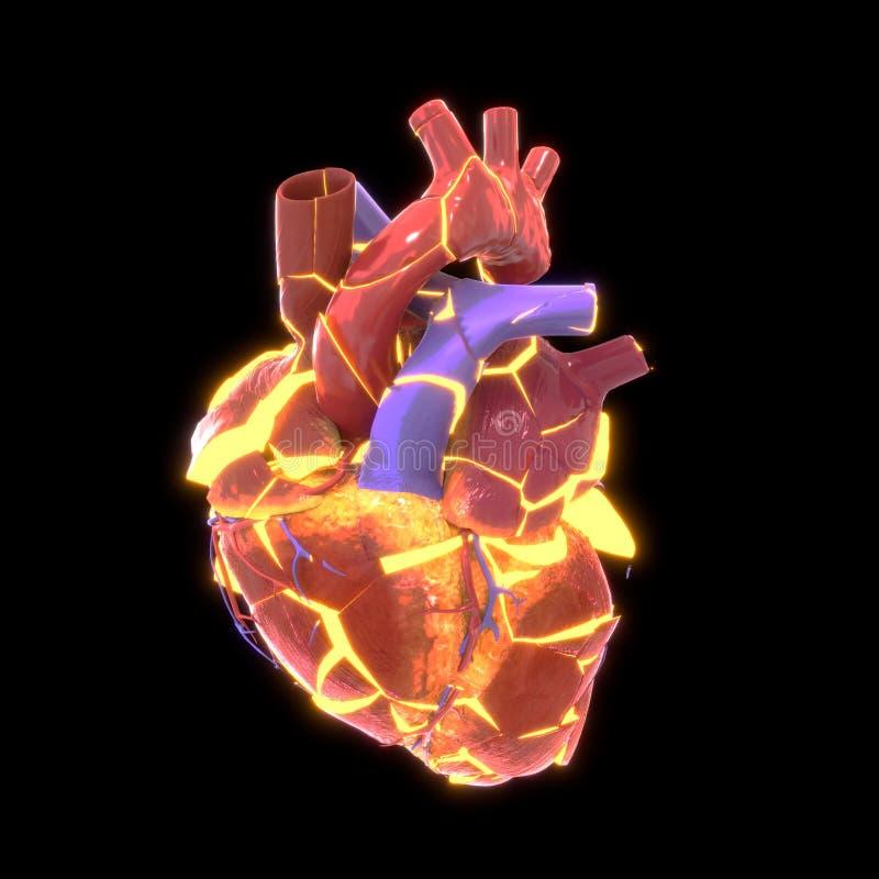 Coração humano que explora, ilustração 3d ilustração stock
