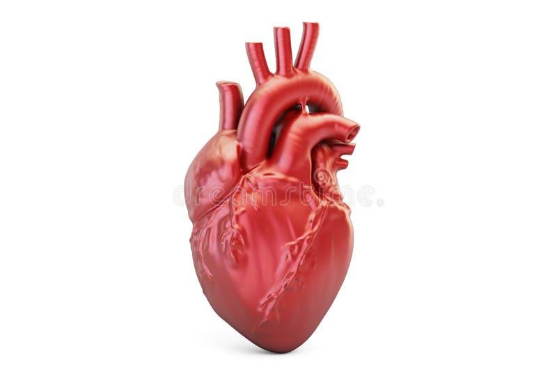 Coração humano, rendição 3D ilustração stock