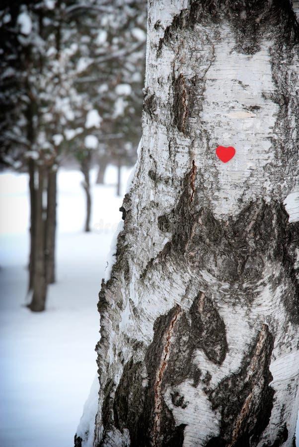 Coração na árvore fotografia de stock