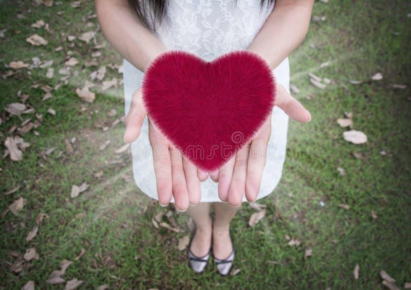 Coração nas mãos das mulheres, amor, fundo do dia do ` s do Valentim fotografia de stock