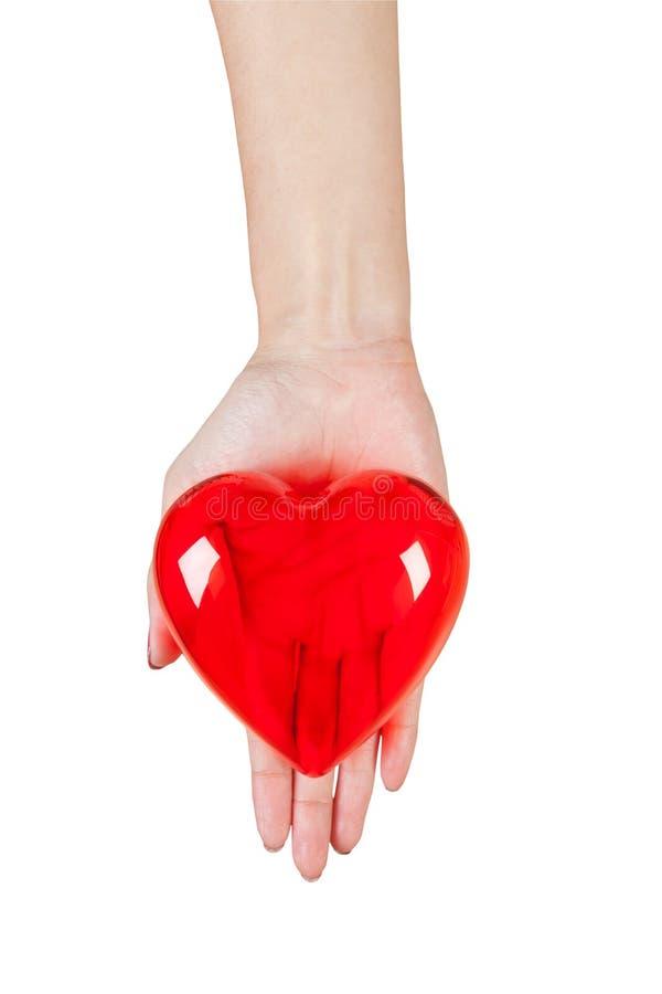 Coração nas mãos isoladas no fundo branco imagem de stock royalty free