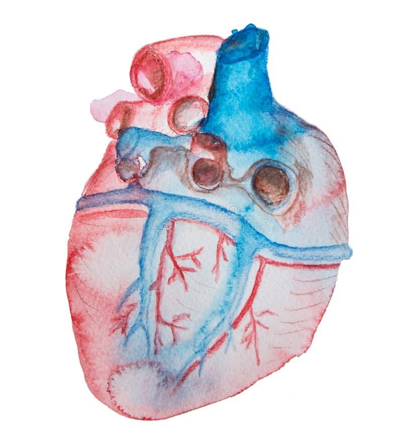 Coração realístico da aquarela ilustração stock