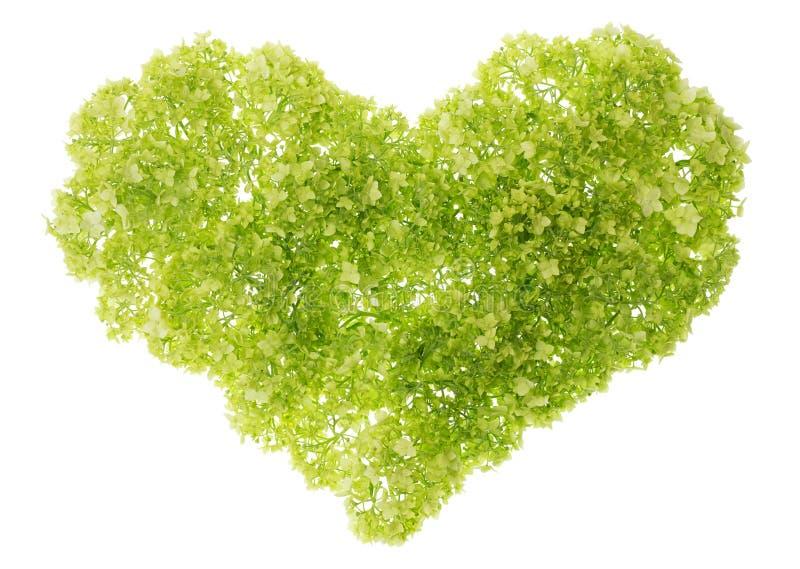 Coração verde delicado imagem de stock royalty free