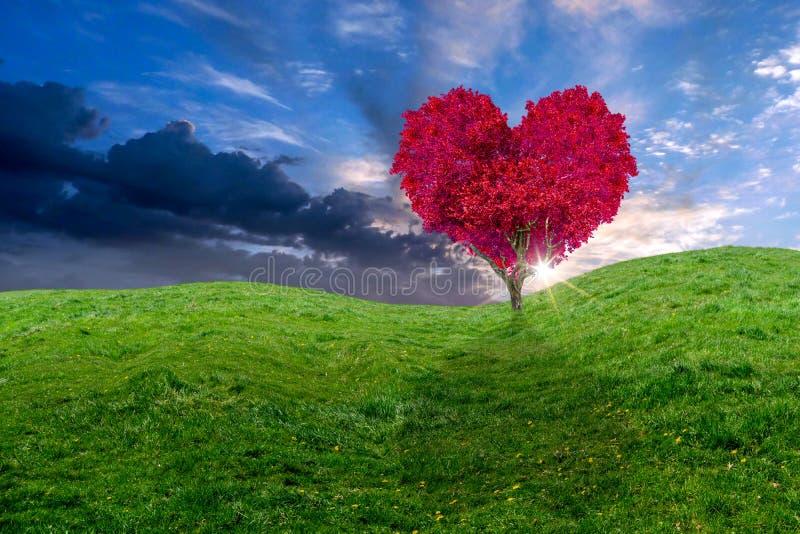 Coração vermelho bonito árvore dada forma em um campo fotografia de stock royalty free
