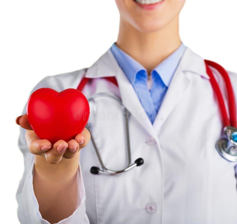 Coração vermelho do close-up à disposição do doutor fêmea imagem de stock
