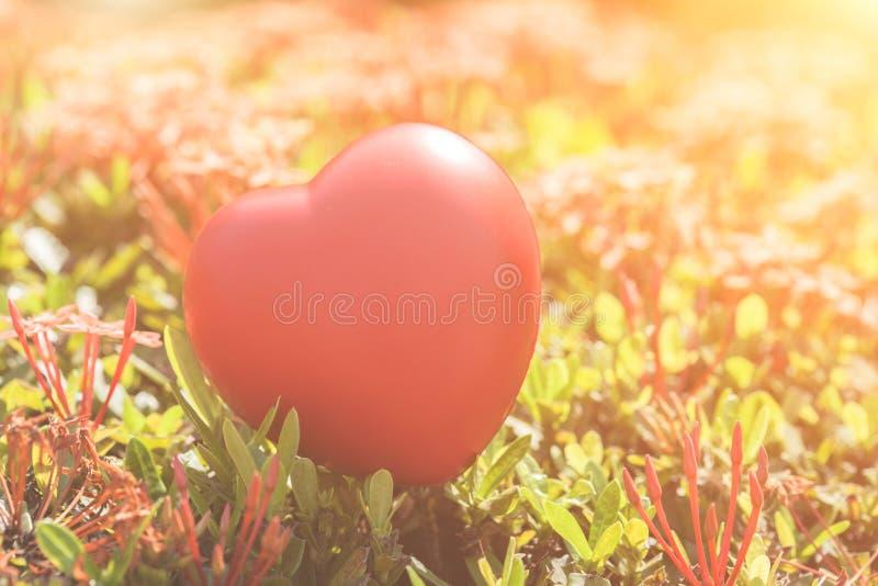 Coração vermelho na árvore verde da flor do ponto para o dia do amor e do ` s do Valentim foto de stock