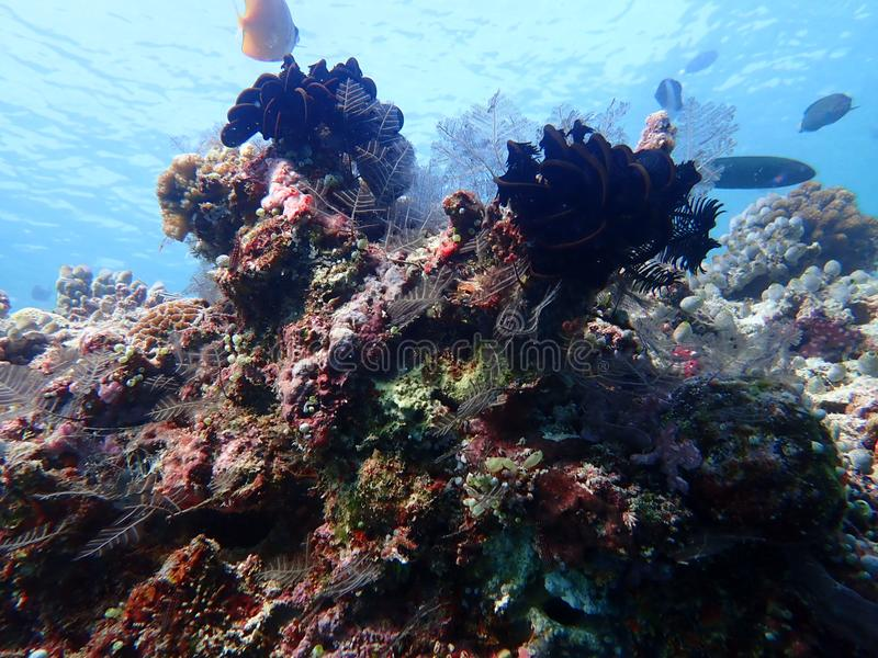 corail images stock