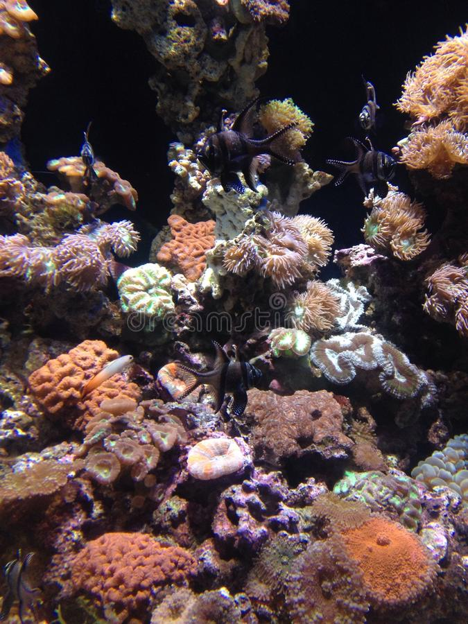 corail image stock