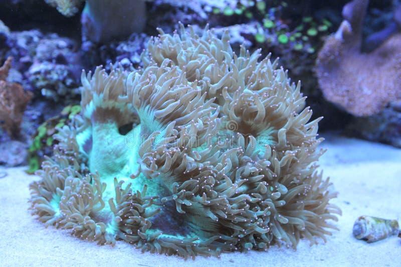 Corail d'océan images libres de droits