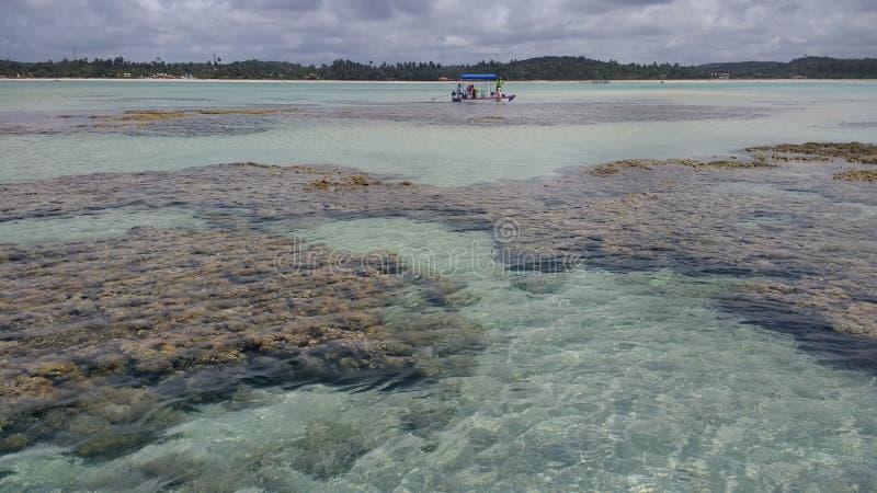 Corais immagini stock