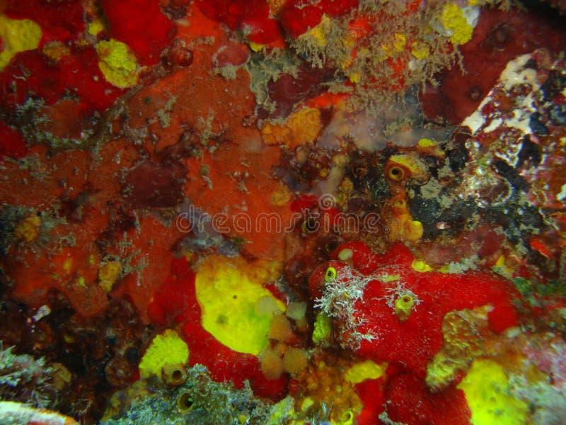 Corais photographie stock