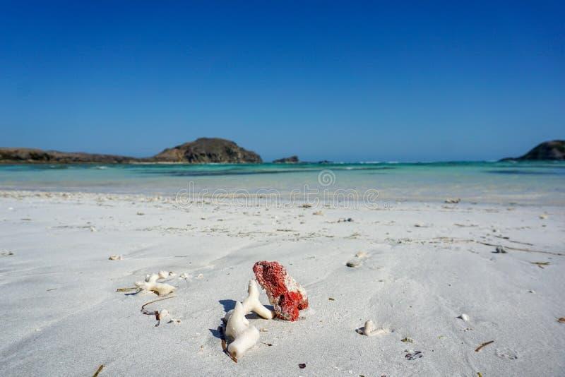 Corais brancos e vermelhos na Praia Rosa, na ilha de Lombok, Indonésia fotos de stock