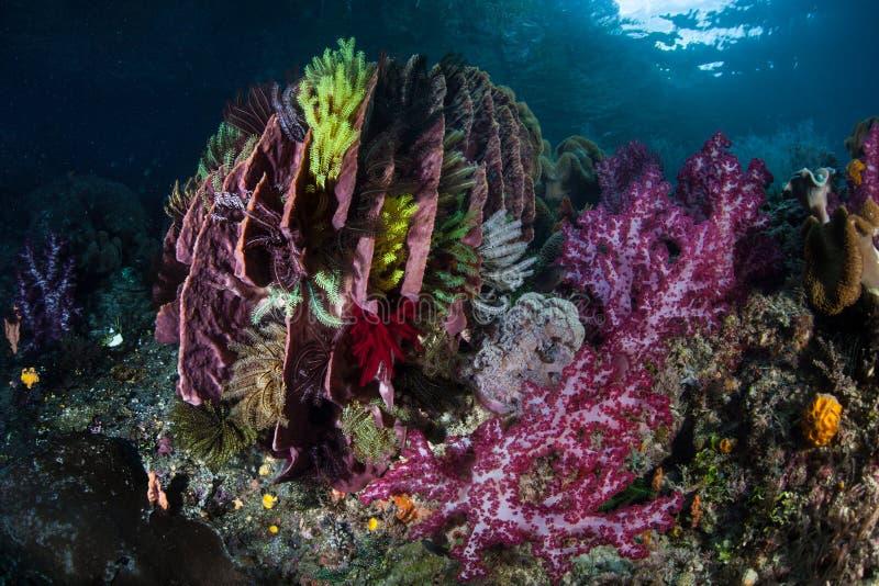 Corais coloridos, Crinoids, e esponja do tambor em Raja Ampat fotografia de stock royalty free