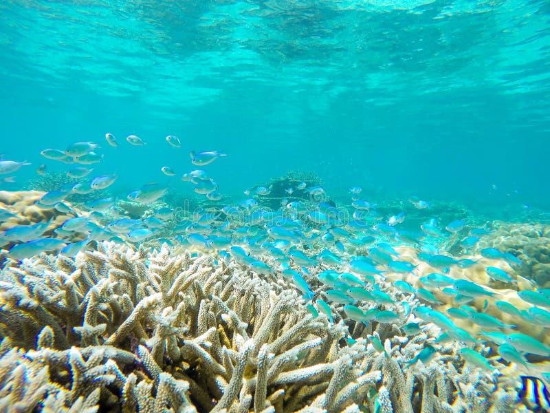 Corais coloridos do oceano no recife no mar tropical morno fotos de stock