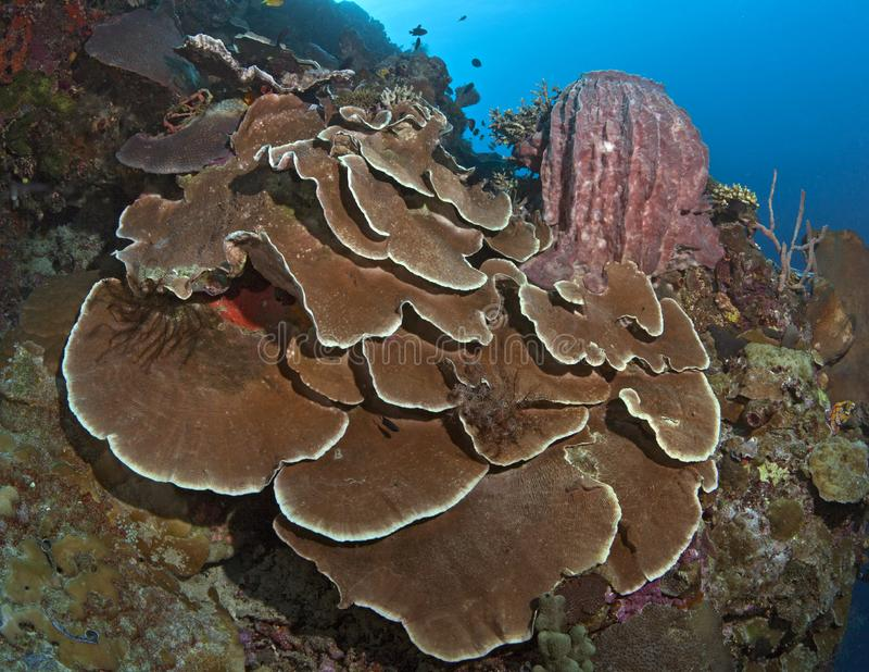 Corais e esponja da placa no recife da parede foto de stock
