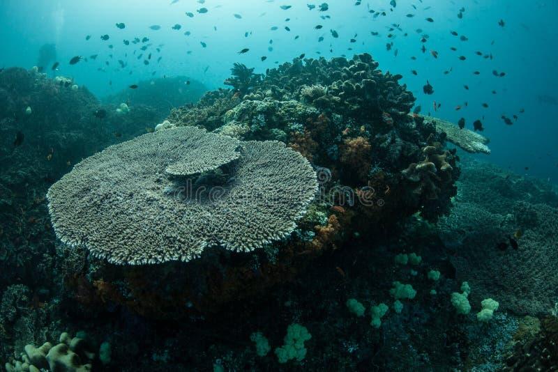 Corais e peixes no Pacífico tropical imagem de stock