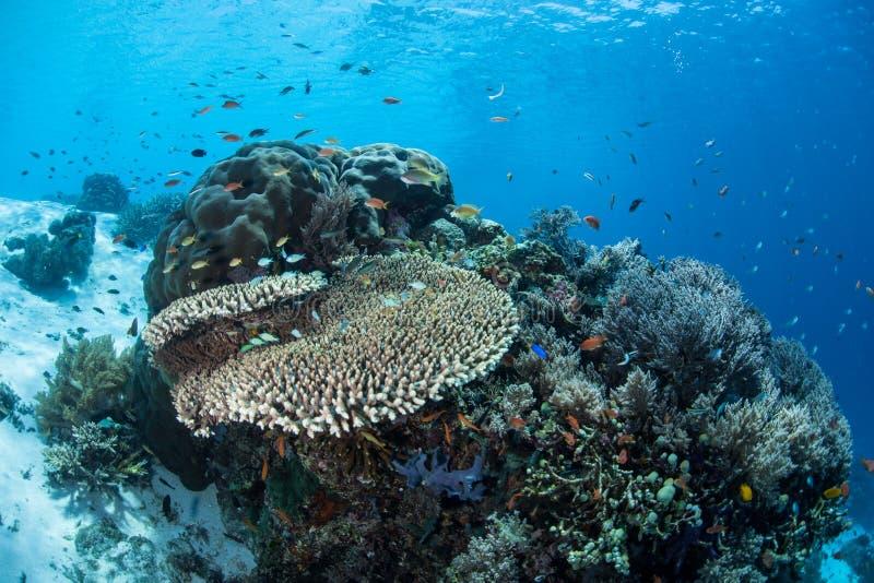 Corais e peixes pequenos imagens de stock royalty free