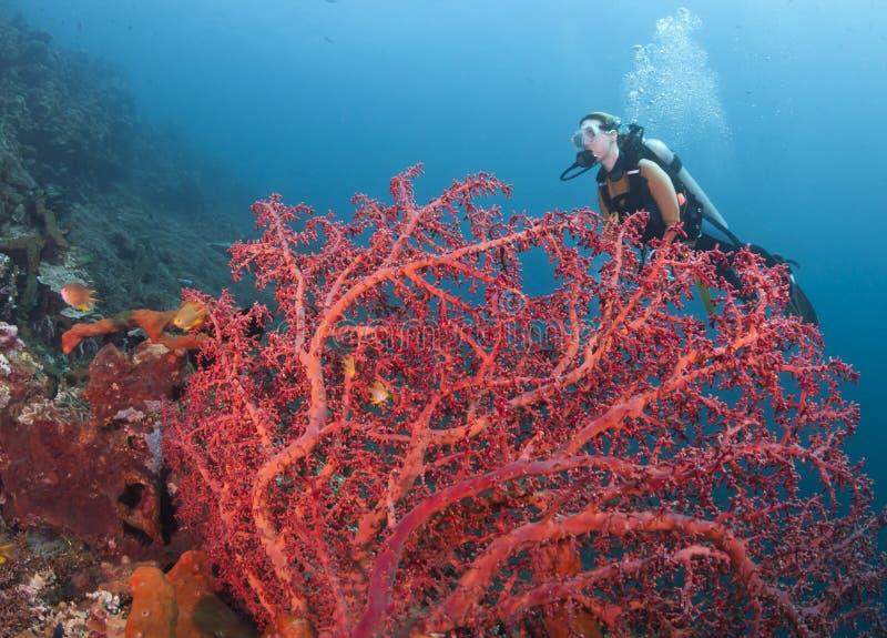 Corais em Bali foto de stock royalty free