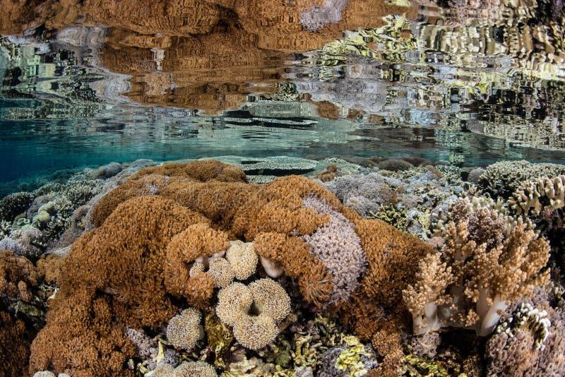 Corais espelhados na superfície do oceano tropical foto de stock