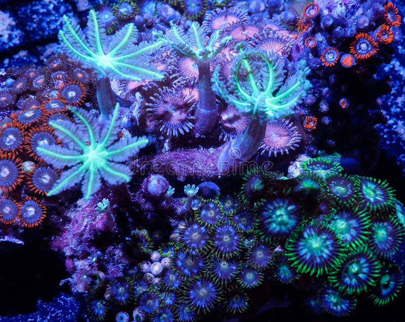 Corais macios fotografia de stock