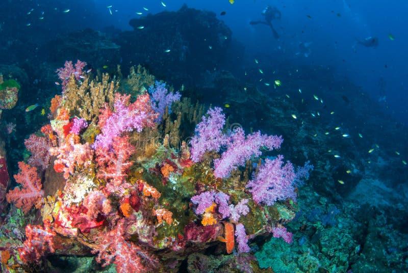Corais macios coloridos em Andaman sul, do sul de Tailândia imagem de stock royalty free
