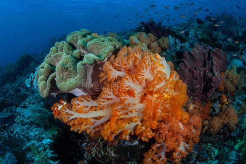 Corais macios coloridos em Komodo imagens de stock royalty free