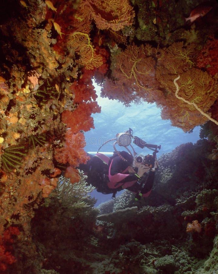 Corais macios de Beqa foto de stock