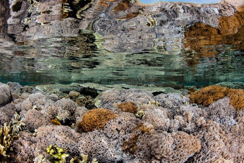 Corais macios no raso do parque nacional de Komodo fotografia de stock