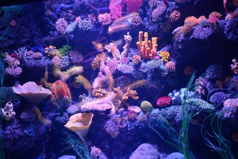 Corais no captiveiro imagem de stock