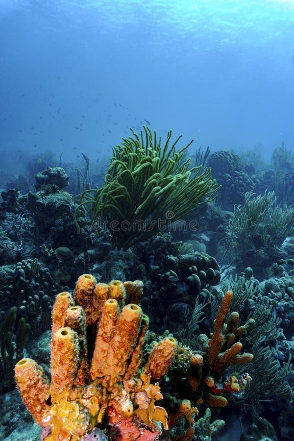 Corais tropicais coloridos foto de stock