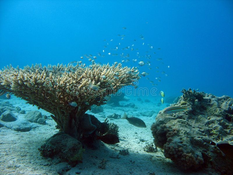 Coral stock photography