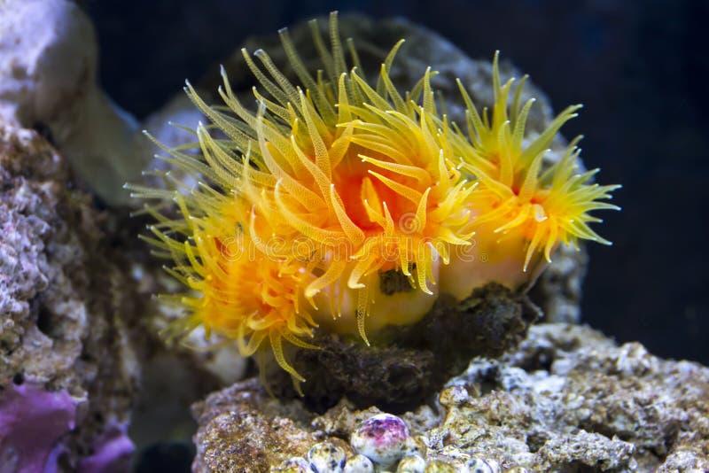 Coral alaranjado do copo foto de stock royalty free